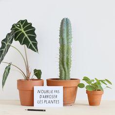 Carte N'oublie pas by Audrey Jeanne Carte g verso gsm white backsideDimensions : x cm Unique Office Supplies, Jeanne, Cactus Plants, Spring Time, Greenery, Garden, Instagram, Interior, Plants