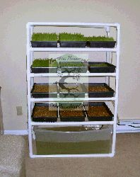 Half-Pint Homestead Shopping Page Hydroponic Gardening, Hydroponics, Gardening Tips, Homestead Farm, Homestead Living, Agriculture, Farming, Fodder System, Meat Rabbits