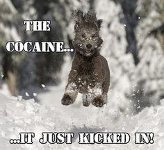 The Cocaine
