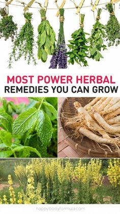 The Most Powerful Herbal Remedies (You Can Grow At Home)