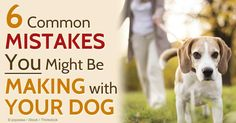 Raising a good dog doesn't come naturally; here are some dog training mistakes most dog owners make that can compromise both parties. http://healthypets.mercola.com/sites/healthypets/archive/2014/08/16/6-dog-training-mistakes.aspx
