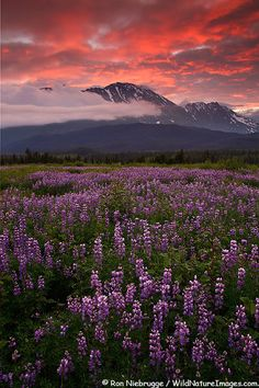 Chugach National Forest near Seward, Alaska