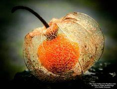 In the middle of nowhere...#christmas #xmas #2018 #foodnetwork #foodandwine #foodstyling #foodblogger #foodbeast #foodlover #foodstagram #foodphoto #foodshare #foodgawker #foodislife #fooddiary #foodism #foodiegram #foodaddict #foodprep #foodpost #foodoftheday #healthyliving #foodtrip #vegan #veg #buongiorno #goodmorning #breakfast #fruit
