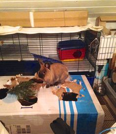 Look at my big play house!! It´s soooo funny!!! Wanna join me?? Dexter on D&D by Inger Johanne 2015