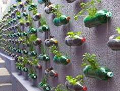 More cool wall gardening!,