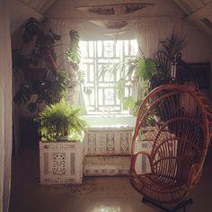 plant, rattan chair, ideal hous, place, sunroom
