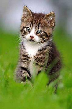 Kätzchen, jetzt bestellen auf kunst-fuer-alle.de