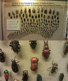 Well, it is a beetle�