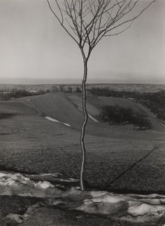 Albert Renger-Patzsch (German, 1897–1966) The Little Tree Date: 1929 Medium: Gelatin silver print