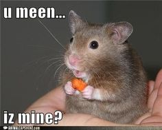Even little tiny animals have such appreciative natures.  ♥