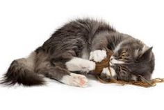 Top ten cat myths