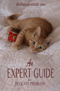 An expert guide to help stop your cat peeing on bed sheets and covers #CatSprayingOdorRemoval #CatSprayingBakingSoda