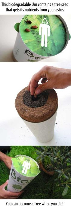 Biodegradable Urn.  A little morbid to be pinning this, but such a beautiful idea.