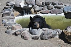 Reno Nevada Animal Ark - Nature & Wildlife Areas - Mingle with the black bear named Gracie who was born in captivity from eastern United States at Animal Ark