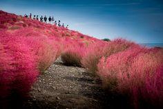 日本を愛するタイ人の撮影した写真が美しすぎて完全にプロの犯行www
