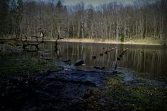 Mazury Forest & Lake