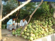 Indian's melons