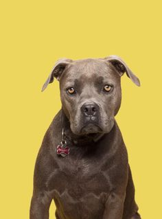 The Great Pit Bull Makeover | TIME.com