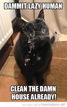 funny-angry-cat-spider-web-face-damn-lazy-human-clean-house-pics.jpg 400×636 pixels