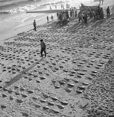 1974, Lota on the beach , Sesimbra by Artur Pastor