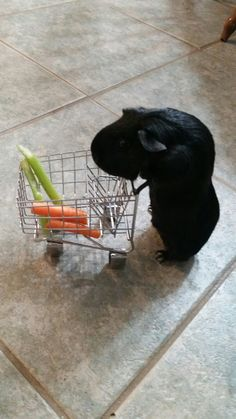 A guinea pig's shopping cart!