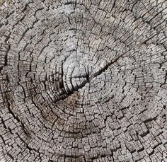 Google Image Result for http://photoshoptextures.com/wood-textures/stump-ring-texture.jpg