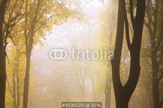 Wall Mural foggy mystic forest during fall - Photo Wallpaper • PIXERSIZE.com