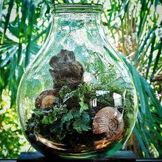 Bottle terrarium with ferns and Perisphinctus Ammonite Fossils from Jurassic Madagascar   출처: Ken Marten