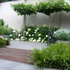Potted Trees, Trees To Plant, Dream Garden, Home And Garden, Dwarf Fruit Trees, Backyard Beach, Seaside Garden, Plant Lighting, Low Maintenance Garden