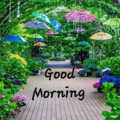A place for pictures and photographs. Good Morning Sunday Images, Good Morning Wishes Quotes, Good Morning Nature, Good Morning Msg, Good Morning My Friend, Morning Thoughts, Good Morning Greetings, Morning Pictures, Rainy Morning