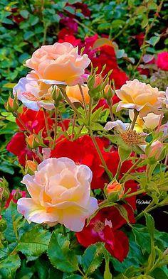 Schöne blumen woman silk bomber jacket - Woman Jackets and Blazers Beautiful Flowers Wallpapers, Beautiful Flowers Garden, Flowers Nature, Exotic Flowers, Amazing Flowers, Beautiful Roses, Pretty Flowers, Colorful Flowers, Beautiful Gardens