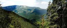 carpathians mountains pine forest travel journey hiking summer
