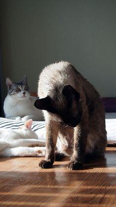 캣대디와 고양이들의 일상 http://koreacats.tistory.com  cat,코리아캣츠,koreacats,고양이,길냥이