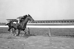 Tim Tam - Trainer Jimmy Jones claimed back-to-back Derby victories when his horse, Tim Tam, won the Derby in Calumet Farm, King Horse, Derby Winners, American Pharoah, Sport Of Kings, Thoroughbred Horse, Racehorse, Horse Riding, Kentucky Derby