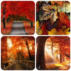 Quotes About Fall Foliage - Bing images Fall Images, Fall Pictures, Great Pictures, Fall Pics, October Country, For Elise, Autumn Photography, Green Mountain, Stay The Night