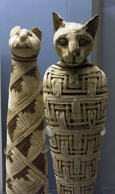 Ancient Egyptian cat mummies.  Even they got to be mummified.