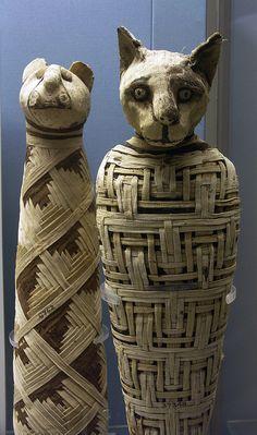 Ancient Egyptian Cat Mummies