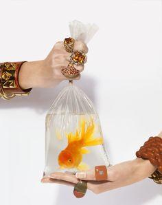 Still life jewelry + gold fish