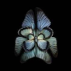 Blue - Butterfly Wings to-Resemble Flowers - Photography - Seb Janiak -  www-designstack-co