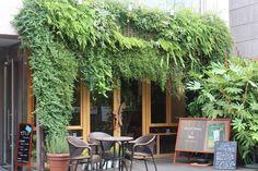 うっそうとした森のような外観の「hiki cafe」は、渋谷の喧噪から少し離れたところに位置します。
