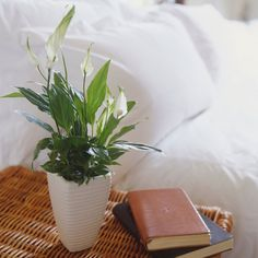 Feeling blue? You need more greenery in your life. Add these humble houseplants and take a relaxing breath of fresh air