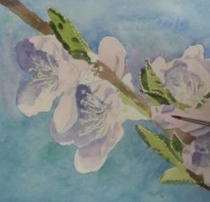 How to Paint Peach Blossoms in Watercolour — Online Art Lessons