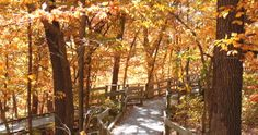 Hiking trails at Fontenelle Forest/Neale Woods