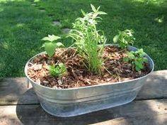 Image result for herbal tea garden