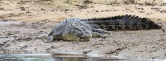 Daintree River Cruises and Times - Daintree River Cruise Centre