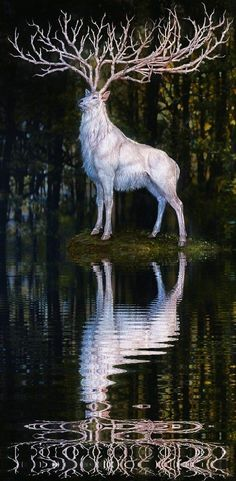 White stag-TheCeltic peopleconsidered them to be messengers from theotherworld