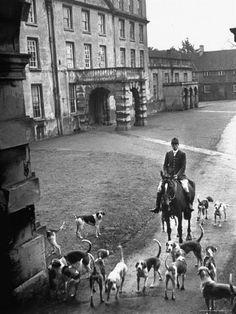 size: Photographic Print: Fox Hunting, England by Mark Kauffman : Artists Salzburg, Fox Hunting, Hound Dog, Sports Art, Life Magazine, Equestrian, Old Things, England, Horses