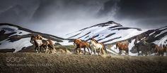 Popular on 500px : Icelandic Horsepower by kossity