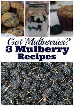 Got mulberries then you need a mulberry recipe (Raspberry Muffin Products) Jam Recipes, Canning Recipes, Fruit Recipes, Summer Recipes, Smoothie Recipes, Dessert Recipes, Cantaloupe Recipes, Blackberry Recipes, Radish Recipes