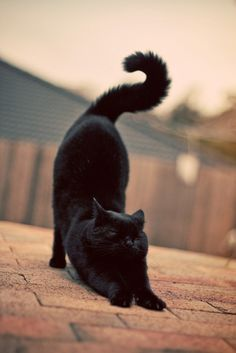 Love black cats and her tail is cool!